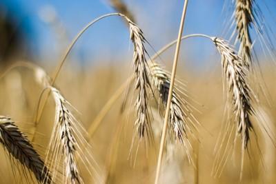 """""""Puls Biznesu"""": afrykański sen rolnika"""