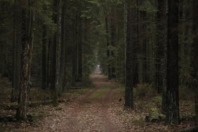 KE zapowiada kroki prawne w związku z wycinką Puszczy Białowieskiej