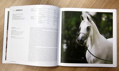ANR: na aukcjach Dni Konia Arabskiego zostanie wystawionych 56 koni