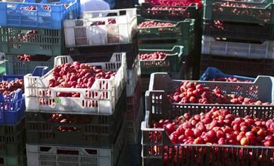 Rozpoczął się skup truskawek; według rolników ceny są za niskie