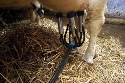 Trudna sytuacja na rynku mleka, słabe widoki na poprawę