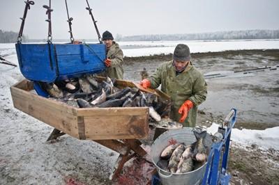 Hodowcy ryb przeciwko nowemu Prawu wodnemu; mają wsparcie marszałków