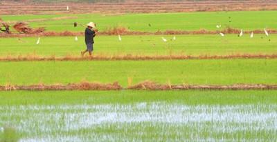 W Japonii odkryto ślady upraw ryżu sprzed 2500 lat