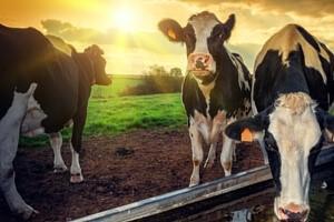 Jak latem zadbać o dobrostan zwierząt?