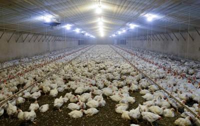 Organizacje pozarządowe: umowa TTIP niekorzystna dla konsumentów i rolnictwa