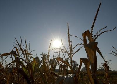 IUNG: susza pogłębia się, obejmuje 17 proc. gmin