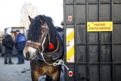 Raport: na targach zwierząt ignorowane przepisy; MRiRW: będzie wzmożony nadzór