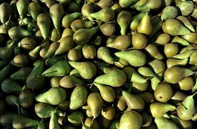 TRSK: zbiory jabłek w '16 wzrosną do 4,15 mln t, gruszek spadną do 65 tys. t