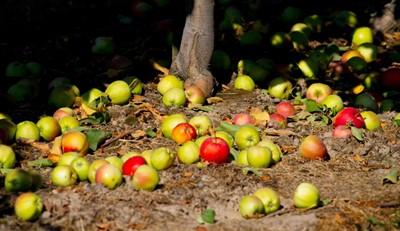 Radom: innowacyjny system wizyjny stosowany przy sortowaniu owoców i warzyw
