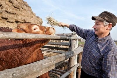 Śląskie: pieniądze na rozwój terenów wiejskich nie tylko z PROW