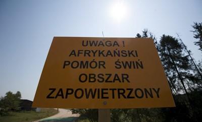 Szef GIW: ASF w gminie Wysokie Mazowickie   - to nie przypadkowe zakażenie