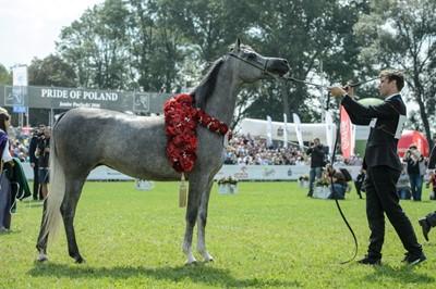 Laury dla koni arabskich w Janowie Podlaskim
