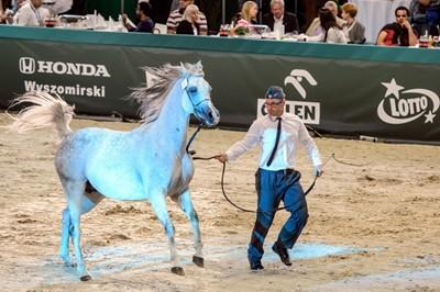 Prawie 1,7 mln euro z dwóch aukcji koni w Janowie Podlaskim