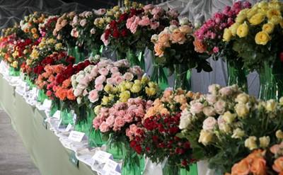 Łódzkie: Święto Róży odbędzie się we wrześniu w Kutnie