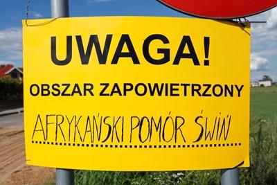 Kolejne ognisko ASF u świń w Lubelskiem; 14. w kraju