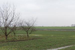 Zabieg herbicydowy teraz czy wiosną?
