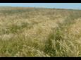 Odporność chwastów na herbicydy