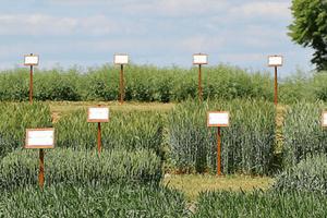 Sprawdzone odmiany zbóż jarych
