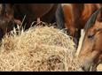 Specyficzne wymagania żywieniowe koni