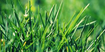 Zakładanie użytków zielonych na słabszych stanowiskach