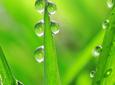 Nawożenie dolistne zbóż wiosną
