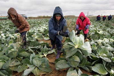 Rosja zaostrzyła kontrolę owoców i warzyw wwożonych z Białorusi