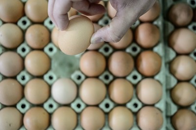 Najwięcej polskich jaj kupuje Holandia, ale są też chętni w Iraku