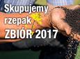 KUPIMY RZEPAK, NOWY ZBIÓR 2017!
