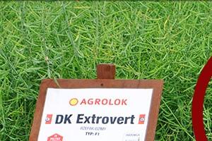 DK Extrovert – film z opinią eksperta