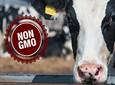 Zakaz stosowania pasz GMO coraz bliżej