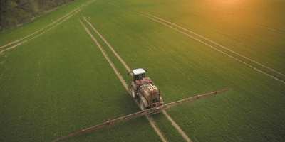 Jesienna regulacja zachwaszczenia zbóż