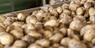 Nawożenie ziemniaka skrobiowego