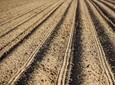 Rola mikroorganizmów glebowych