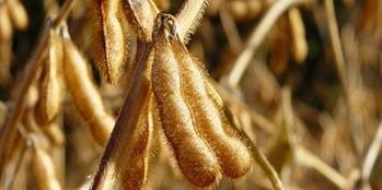 Ekonomika uprawy soi
