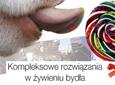 Kompleksowe rozwiązania w żywieniu bydła