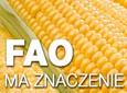 Co oznacza liczba FAO w uprawie kukurydzy?
