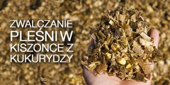 Jak zwalczyć pleśń w kiszonce z kukurydzy?