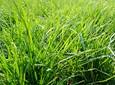 Jak zwiększyć wykorzystanie azotu na użytkach zielonych?