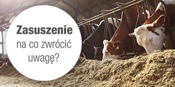 Zasuszenie krowy – na co zwrócić uwagę?