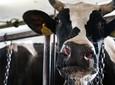 Gotowa recepta na opłacalny chów bydła