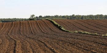 Jak skutecznie zatrzymać wodę w glebie?