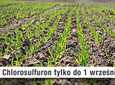 Chlorosulfuron znika z rynku herbicydów!