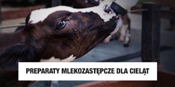 Odchów cieląt z użyciem preparatów mlekozastępczych