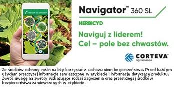 Skuteczna ochrona herbicydowa rzepaku dostosowana do różnych potrzeb