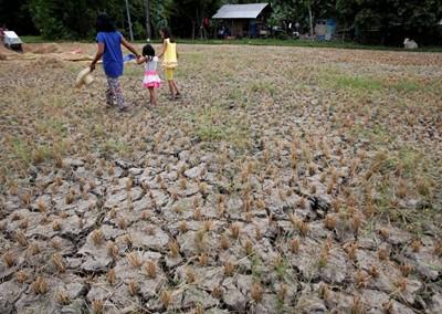 """""""Gazeta Wyborcza"""": azjatycki spichlerz ryżowy wysycha"""