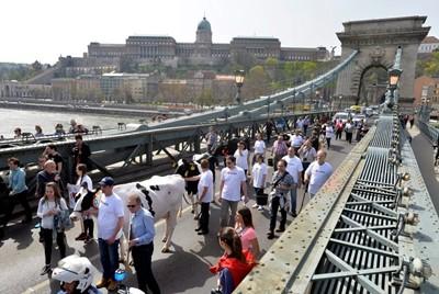 Węgierscy rolnicy demonstrowali na rzecz dopłat do produkcji mleka