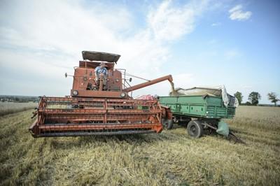 Zbiory zbóż w tym roku na poziomie 28-29 mln ton - ARR