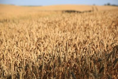 KRD: rośnie zadłużenie rolnictwa