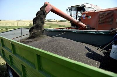 Zbiory zbóż wyższe niż przed rokiem, ceny na zbliżonym poziomie - IERiGŻ