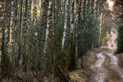 Wchodzą w życie przepisy ws. pierwokupu prywatnych lasów przez państwo